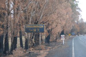 Narbethong Fires 2009 /img 1
