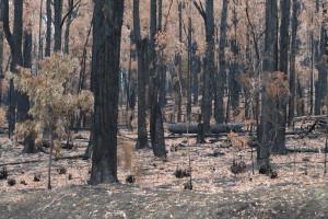 Narbethong Fires 2009 /img 8