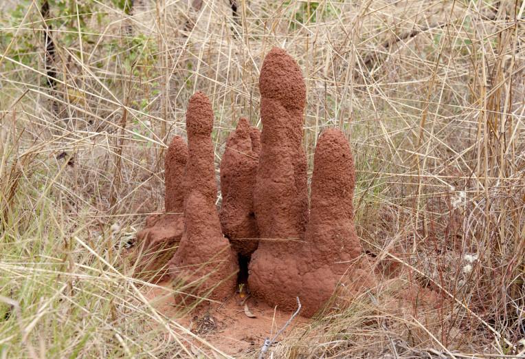 High Rise ants nest's