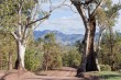 Two Gum Trees Highlight the beauty of the Flinders Ranges, South Australaia