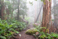 Fern Covered walking track in Gippsland